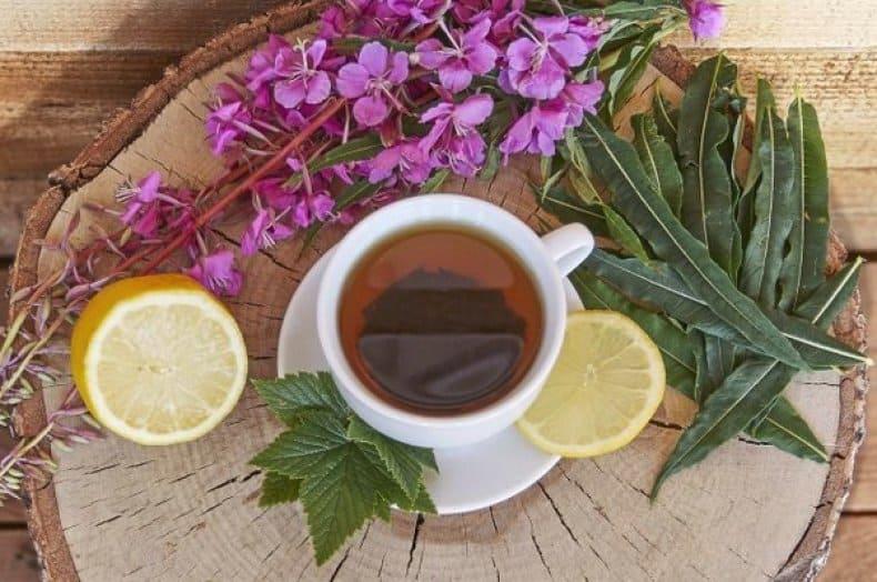 иван чай: как собирать и сушить и делать чай