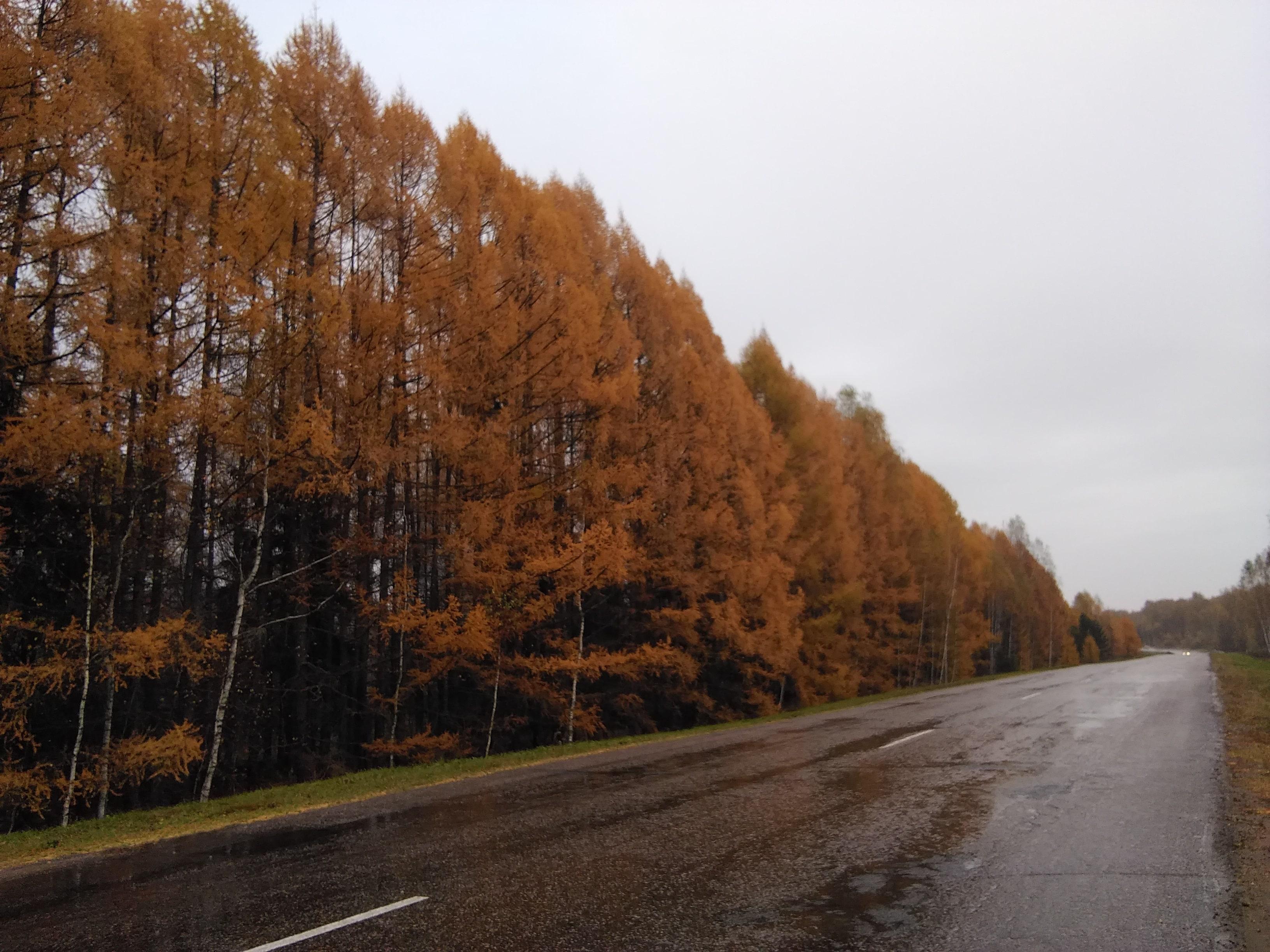 поездка в Дивеево осенью