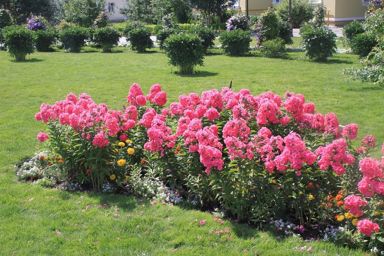 Цветы в Дивеево