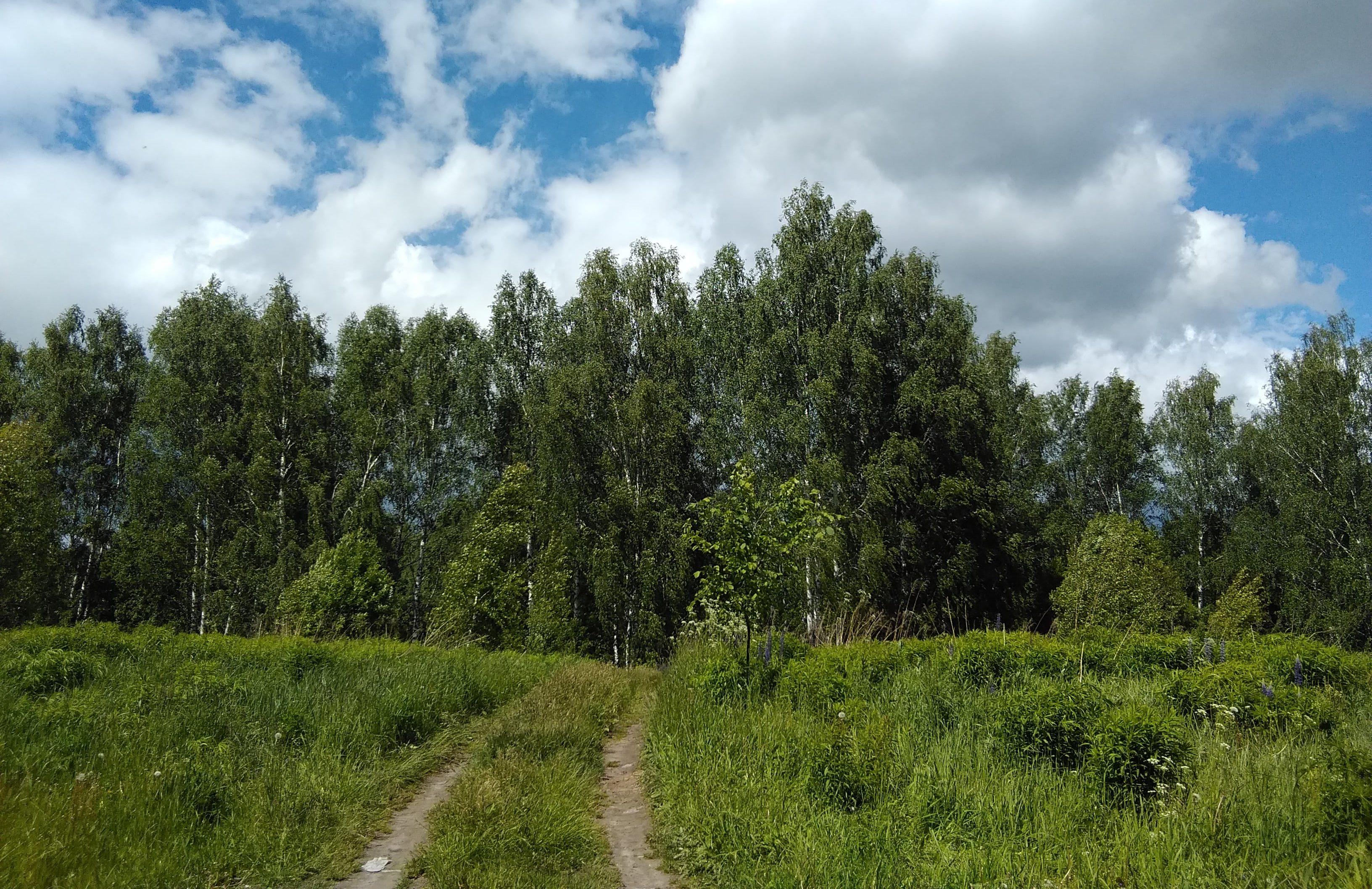 Леса в Дивеево